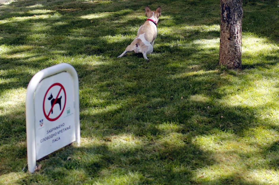 Со мурал против кучешки измет