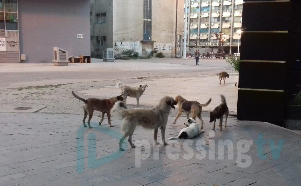 Двајца каснати од кучиња скитници во Скопје