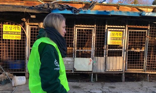 Кореја ja урива најголемaтa кланица за кучиња