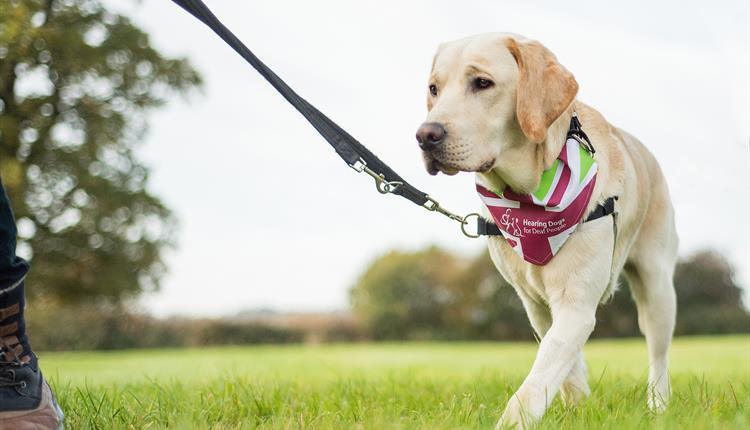 Се забранува шетање кучиња преку ден