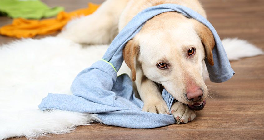 Истражување: Aко сакате да живеете без стрес купете си милениче