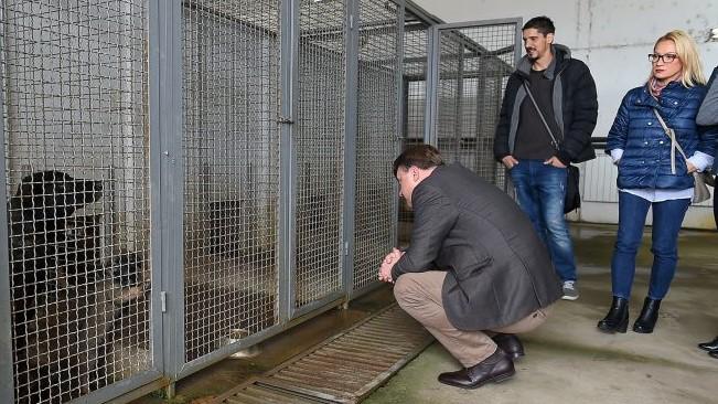 """""""Лајка"""" ќе се грижи за уличните кучиња во Скопје"""