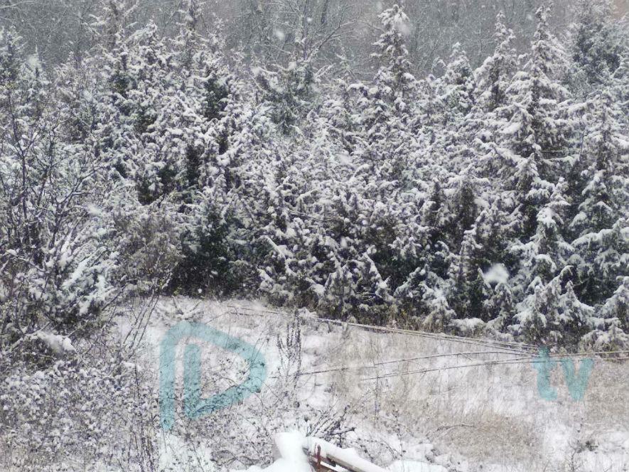 Доаѓа поларен бран: Снег за Василица