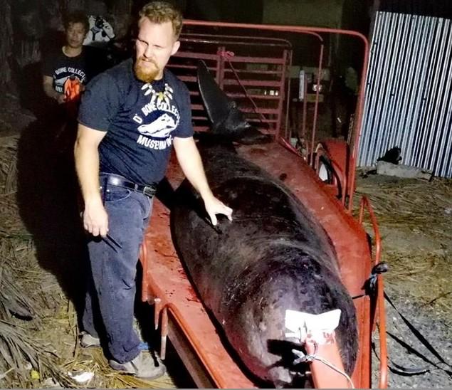 Пронајден мртов кит со 40 килограми пластични кеси!
