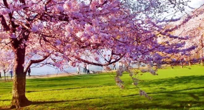Пролетта почнува од сега