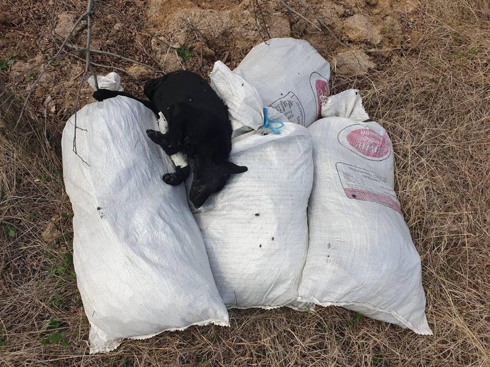 Вреќи со мртви кучиња фрлени во Куманово