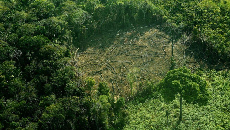 Светот во 2018 година останал без 12 милиони хектари шума