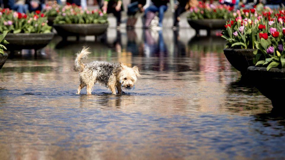 Холанѓанец бара да се укине данокот за кучиња – тој закон ги дискриминира граѓаните