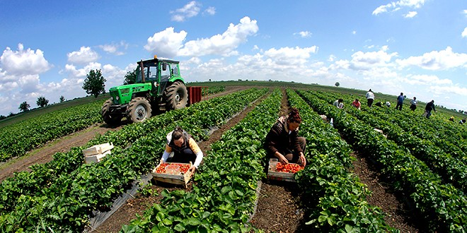 Потенцијалите на земјоделството неискористени, субвенциите без резултат
