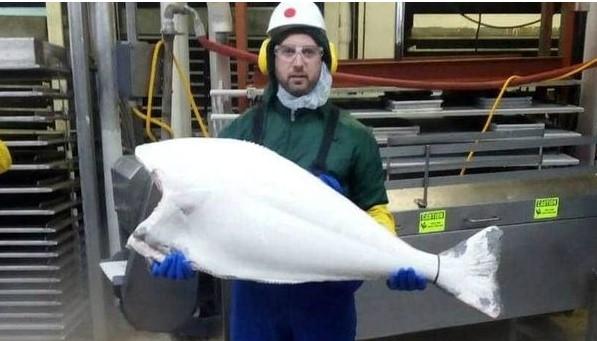 Нова можност за заработка: Балканци на Аљаска чистат риби за 3.000 долари месечно (ФОТО)