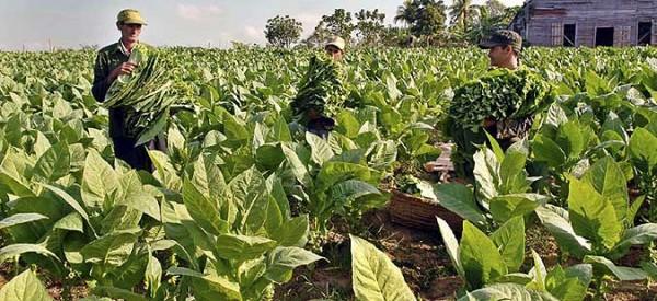 Новиот закон за тутун се потпиша, а бројот на тутунари се намалува оти заминуваат во странство