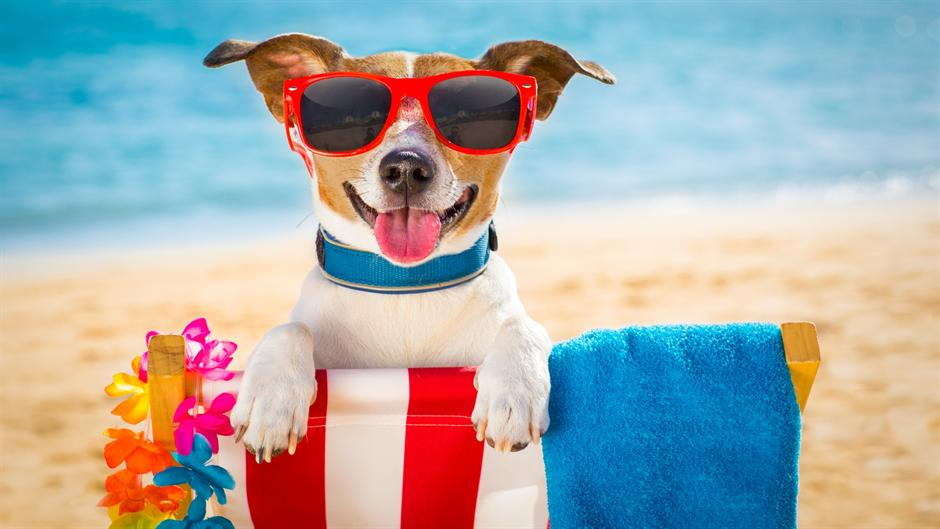 Мили, слатки и сакани: Ова се петте најпопуларни миленичиња на Инстаграм (ФОТО)