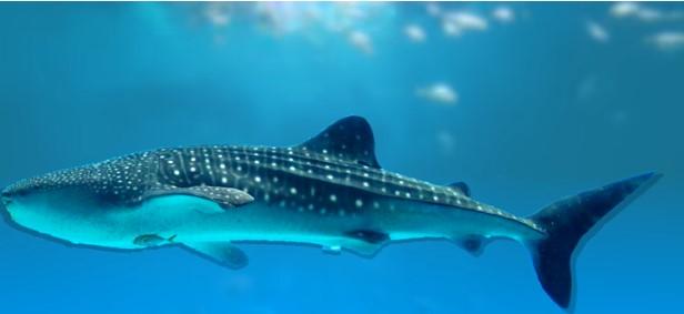 2.200 метри над нивото на морето: Џиновски аквариум во Кина (ВИДЕО)