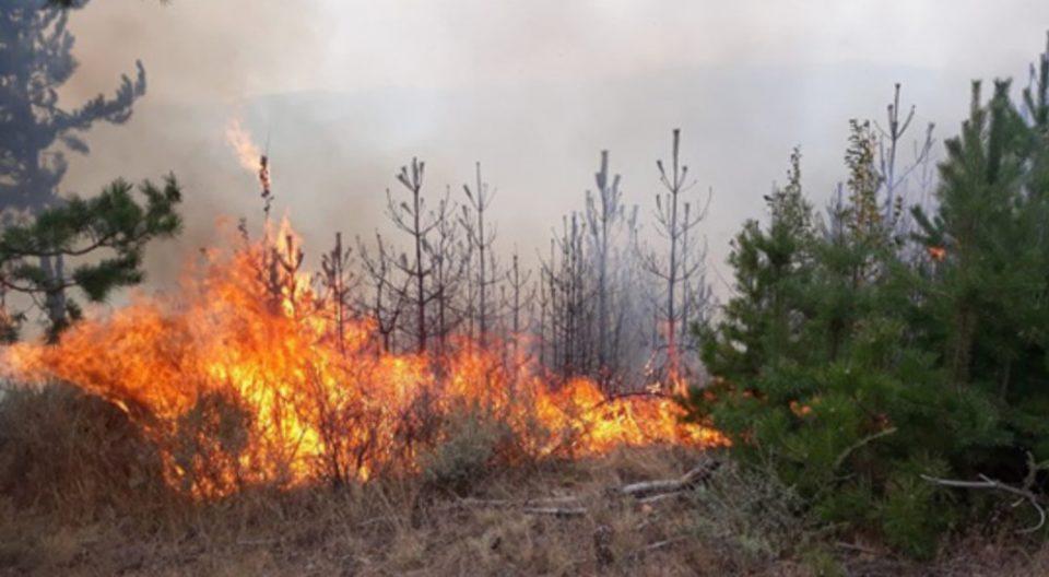 Гори сува трева и борова шума кај скопско Љубин