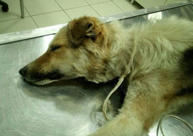 Ужас во Русија: Го силувал кучето до смрт
