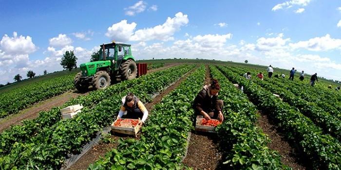 За СДСМ аграрните политики се успешни, за ВМРО ДПМНЕ земјоделците се доведени до питачки стап