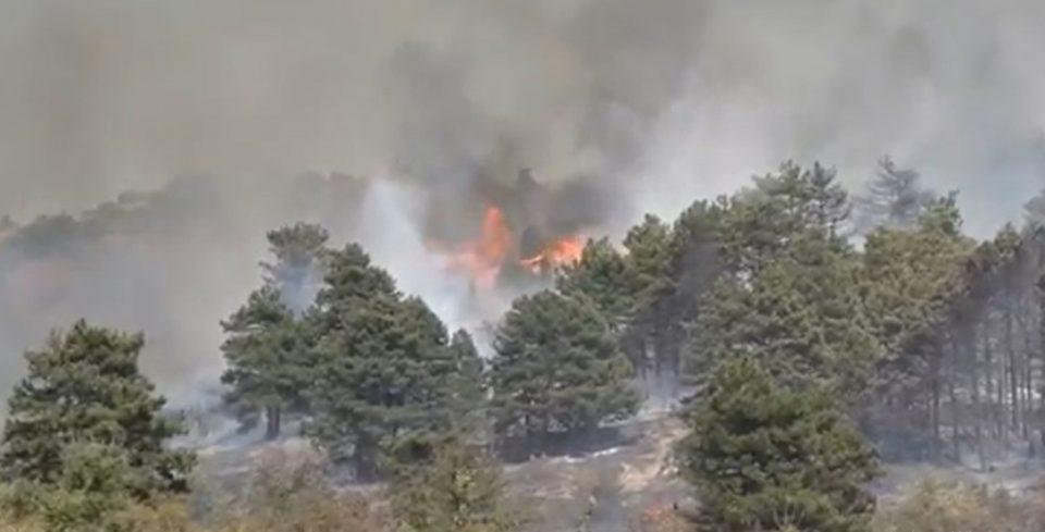 Пожар кај манастирот Свети Димитрија во Селце – евакуирани 500 ученици