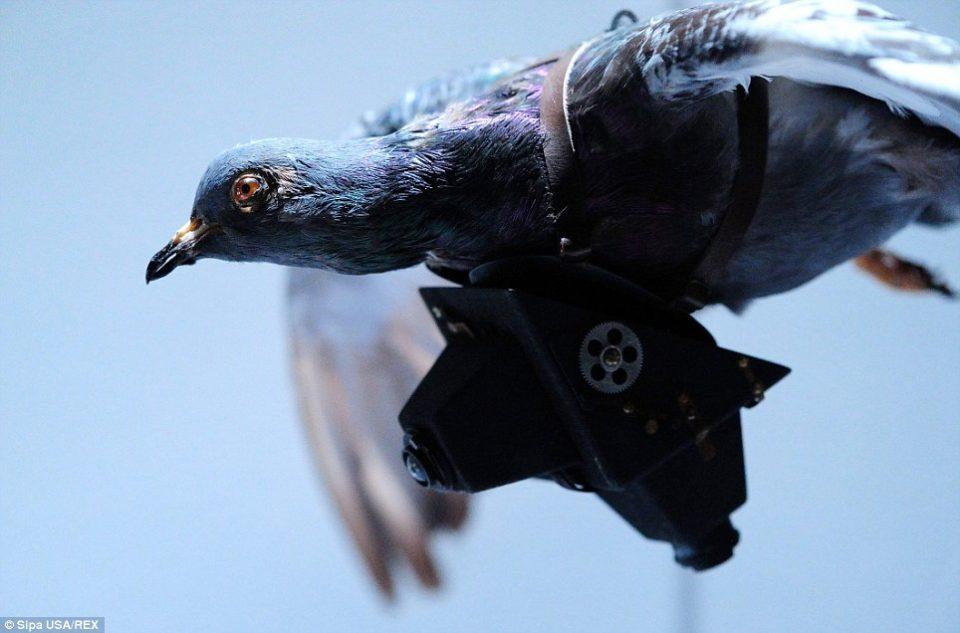ЦИА праќала гулаби во шпионски мисии