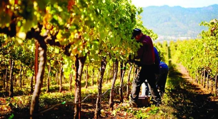 Димковски: Ја имаме предвид сушата, со лозарите ќе ја дизајнираме најавената интервентна мерка од државата за грозјето
