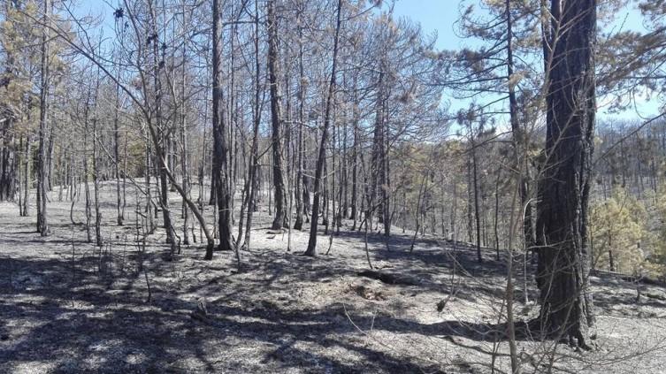 """Од понеделник ќе се расчистува опожарениот терен над велешкото езеро """"Младост"""""""
