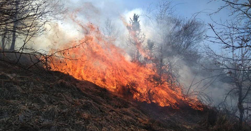 Нискостеблеста шума гори кај Пробиштип и Ваташа