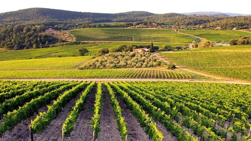 Тиквешијата во Балкански вински водич