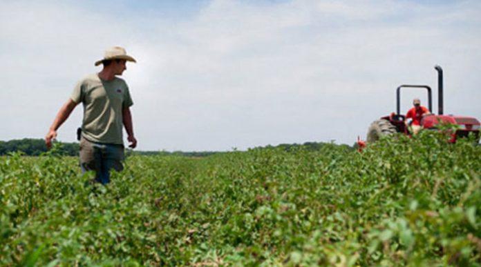 Ќе се продава најквалитетното земјоделско земјиште