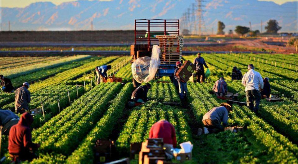 Земјоделството лани без позначаен исчекор