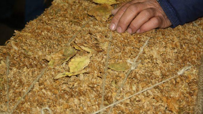 Откупени 80 отсто од реколтата тутун со досега највисока просечна цена од 222,5 денари