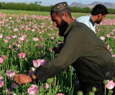 Кој се живее во Авганистан:  Паштуни, Таџици, Хазарејци, Туркени….